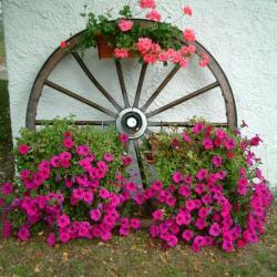 Fleurs sur ancienne roue