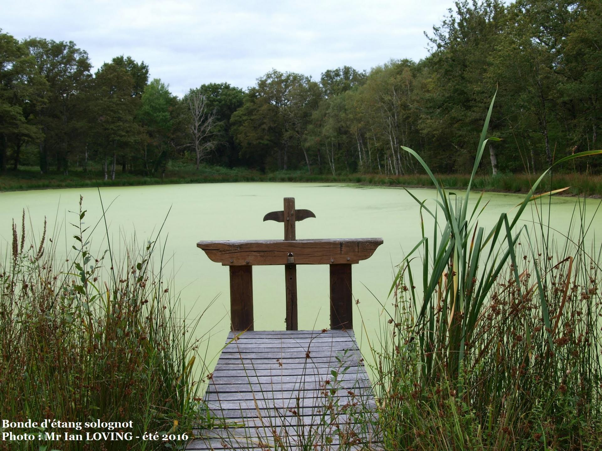 Bonde d'étang