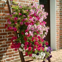 Fleurs au long d'un mur